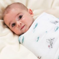 Liam the Brave Easy Swaddle - Flying Dogs Aden and Anais Baby Pic Item no. 2110